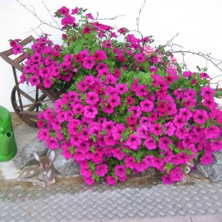 Blumen, © im-web.de/ Touristinformation Fischbachau