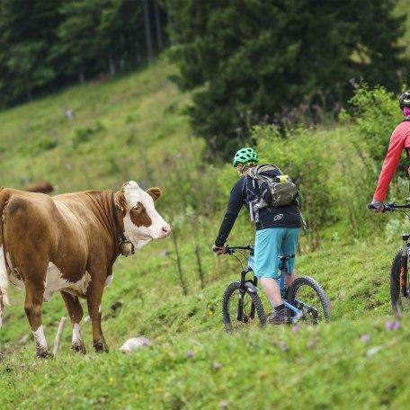Mountainbike Voralpen Fischbachau, © Dietmar Denger