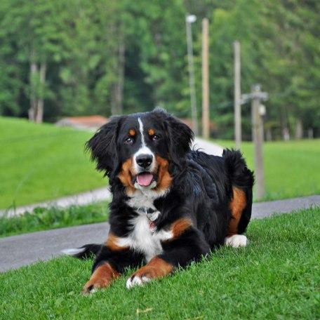 Unser Hund, © im-web.de/ Touristinformation Fischbachau
