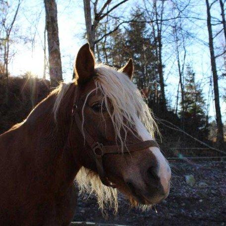 Pferde, © im-web.de/ Touristinformation Fischbachau
