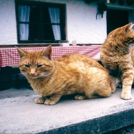 Tiere, © im-web.de/ Touristinformation Fischbachau