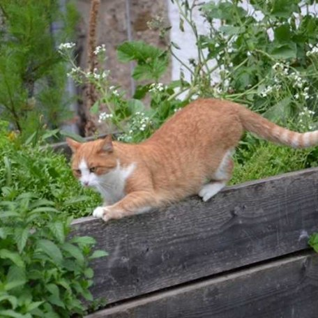 Unsere Katze Mauzi, © im-web.de/ Touristinformation Fischbachau